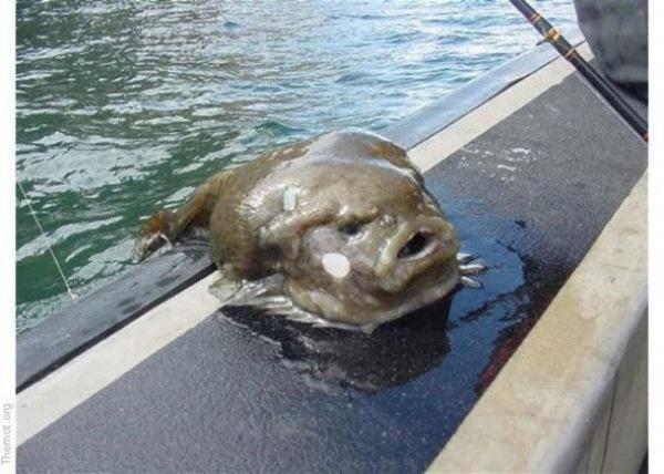 ausflipper der cholerische delphin